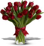 Radiantly Red Tulips showcasing twenty red tulips arranged in a glass cylinder with a red bow in Washington DC and Rockville MD, Palace Florists