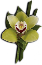 Orchid Boutonniere - Washington DC - Rockville MD – Palace Florists