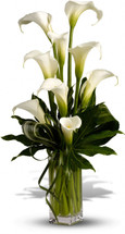Calla Lilies Flower Arrangement - Washington DC - Rockville - Palace Florists