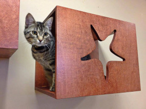 Starfish cat wall perch