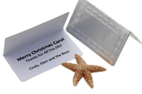 gift-card-insert-from-by-the-sea-jewelry.jpg