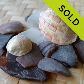 Beach Combers Special - Brown and White Sea Glass With Shells