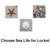Choose Sea Life For Locket