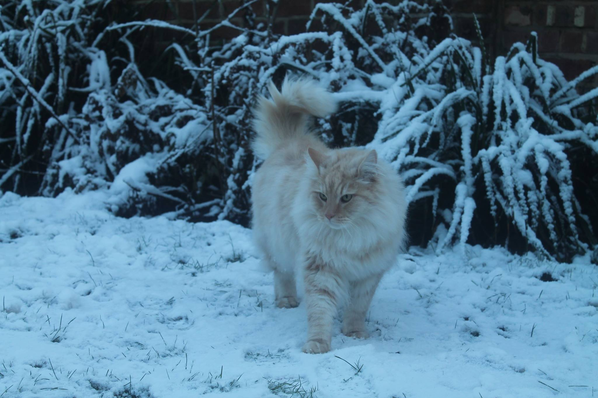 Do Cats Like the Snow? Cat Safety Tips - ProtectaPet