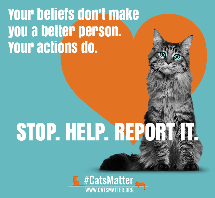 Cats Matter