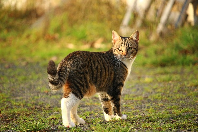 Reduce the risks for outdoor cats