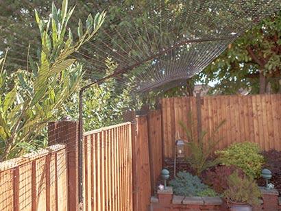 cat proofing your garden