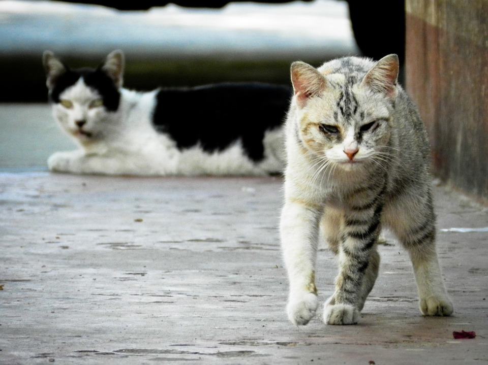 Stray and feral cats