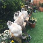 Cat Enclosure Post (Turf)