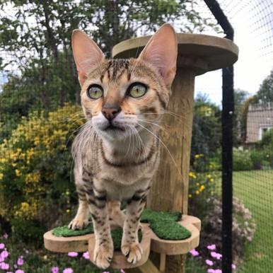 ProtectaPet® Corner Cat Enclosure Post