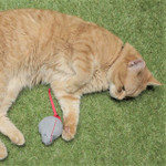 Street Cat Bob enjoying his cat nip mouse!
