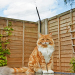 ProtectaPet Cat Fence Corner Adapter
