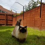 ProtectaPet® Cat Fence Extension Corner Post are used in corners of boundaries that are 2ft-5ft tall.