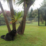Galvanised steel mesh as a chew guard on the bottom of cat enclosures.
