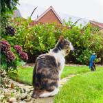 ProtectaPet Cat Fence Bracket