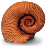 Ammonite - Photo Museum Store Company