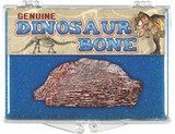 Dinosaur Bone Fossil - Mesozoic Era, 65 to 250M Years ago - Actual Authentic Fossil - Photo Museum Store Company