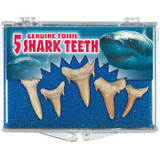 Sharks Teeth Fossil Box - Eocene to Cretaceous 40 to 110 MYA - Actual Authentic Fossils - Photo Museum Store Company
