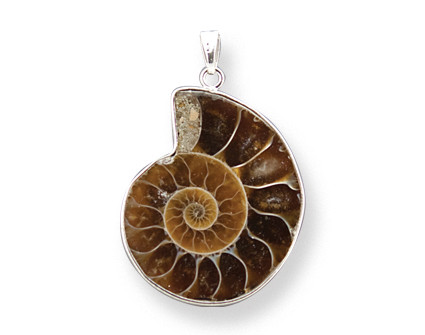 Ammonite Pendant Silver Coated on Sides on Silver Chain - Photo Museum Store Company