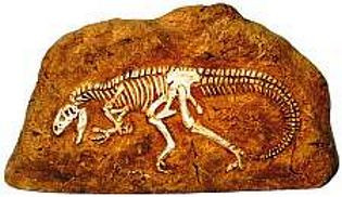 Allosaurus (Dinosaur Fossil Reproduction) Late Jurassic and early Cretaceous Period - Photo Museum Store Company