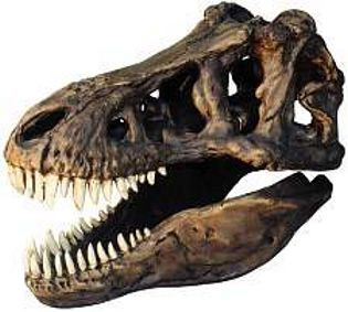 Tyrannosaurus Rex (1/4 Scale Reproduction) End of the Cretaceous Period - Photo Museum Store Company