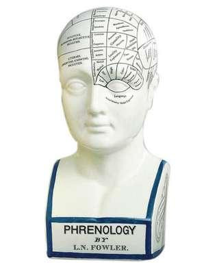 Doctor's Phrenology Head - Medical Artifact & Medical History - Photo Museum Store Company