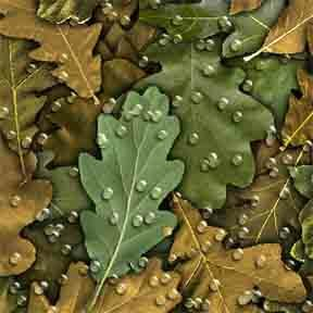 ArtScape 7' Oak Leaves Pool Table Cloth