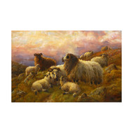 """Sheep Resting in Highlands"", oil painting 