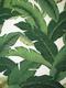 TBO Swaying Palms Outdoor Aloe