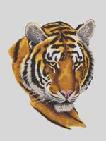 Tiger Portrait Canvas only By Grafitec