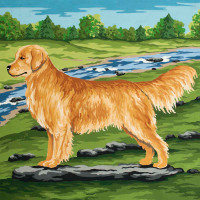 Golden Retriever Canvas only By Grafitec
