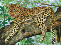 Lazing Leopard Canvas only By Grafitec