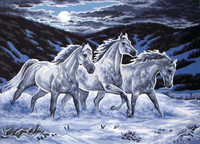 Midnight Stallions Canvas only By Grafitec