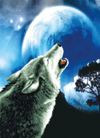 Howling Wolf No Count Cross Stitch Kit By Riolis