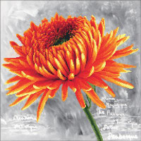 Orange Dahlia No Count Cross Stitch Kit By Riolis