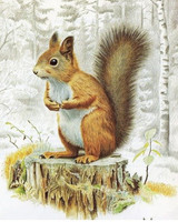 DIAMOND PAINTING KIT SQUIRELL