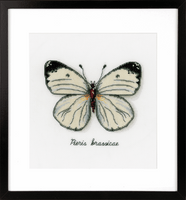 Counted Cross Stitch Kit: White Butterfly By Vervaco