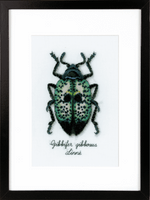 Counted Cross Stitch Kit: Blue Beetle By Vervaco