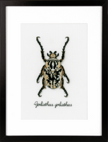 Counted Cross Stitch Kit: Beige Beetle By Vervaco