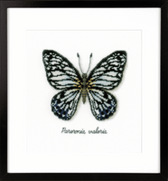 Counted Cross Stitch Kit: Blue Butterfly By Vervaco