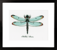 Counted Cross Stitch Kit: Dragonfly By Vervaco