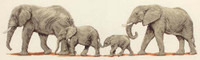 Elephant Stroll Cross Stitch Kit