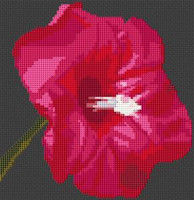 Morning Glory Flower Cross Stitch Chart