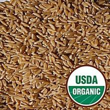 Wheat, Hard Red Winter, 25 LB, Grains