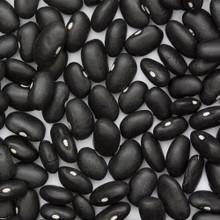 Black Turtle, 5 LB, Beans