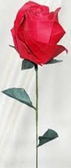 Premium Single Rose -each