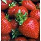 Strawberries - Large