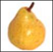 Anjou Pear - lb