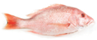 Fresh Whole Large American Red Snapper -lb