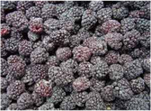 Frozen Whole Blackberries - 16 oz